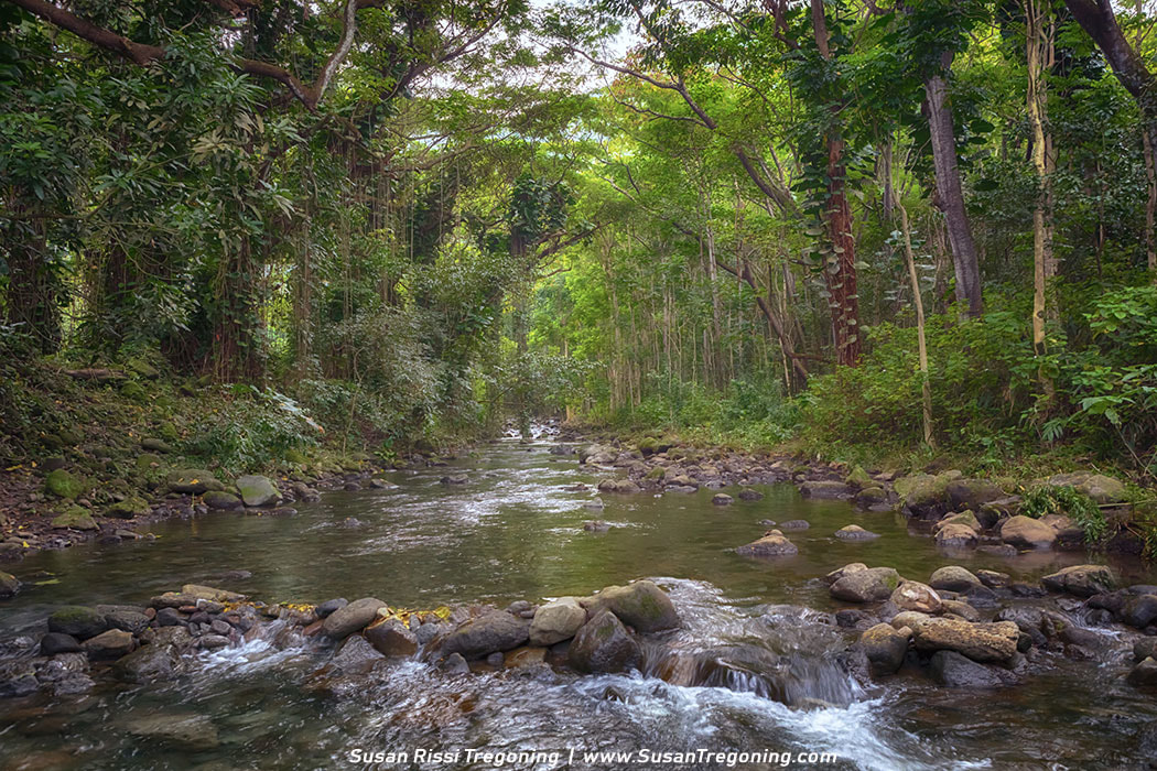 Picture - Crossing Wailoa Stream