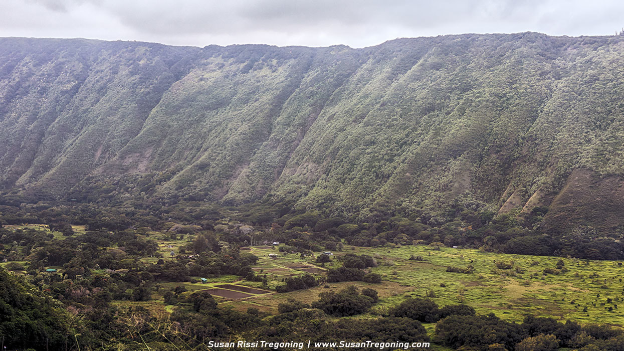 Picture - Looking down over the Waipi'o Valley taro farms.